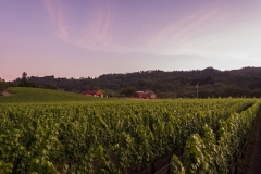 ehlersvineyard-July 13, 2015200