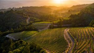 Drone Photography for Vineyards